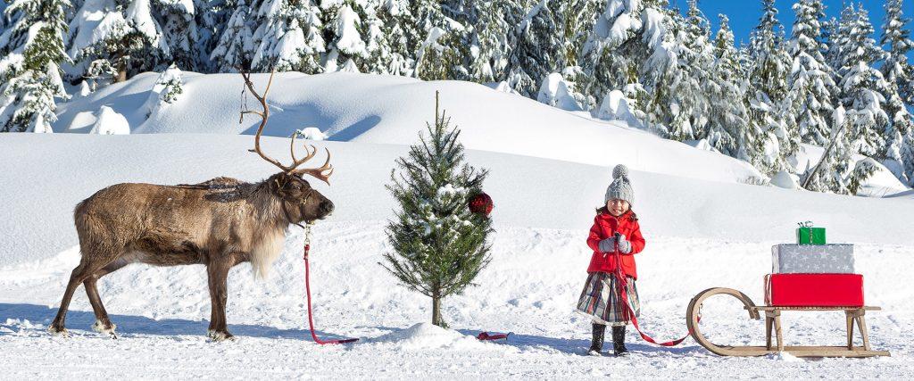 The Peak of Christmas