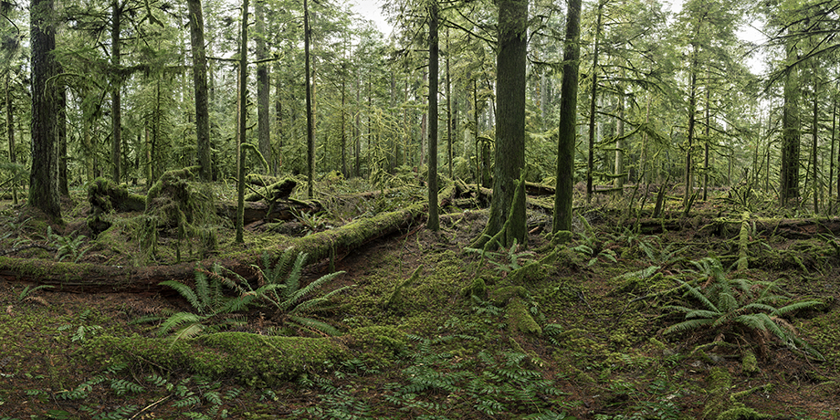 Cathedral Grove #1, Vancouver Island, British Columbia, Canada, 2017